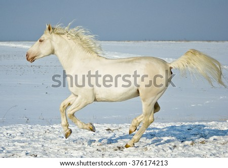 white horse runs in the snow field on a background of dark blue sky