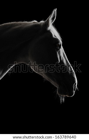 white horse silhouette in the darkness - stock photo