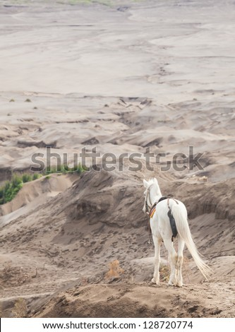 White horse stand at Desert Sand Dune Mountain Landscape of Bromo Volcano crater, East Java Island Indonesia (Selective focus at horse) - stock photo