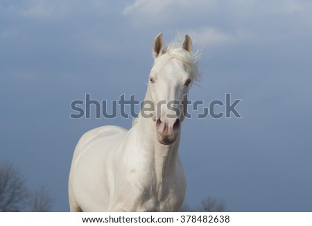 white horse standing on the background of dark blue sky