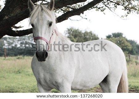 white horse stands in a meadow and looks - stock photo
