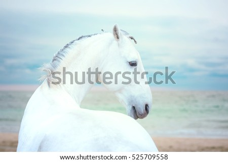 White horse stay on the sea background