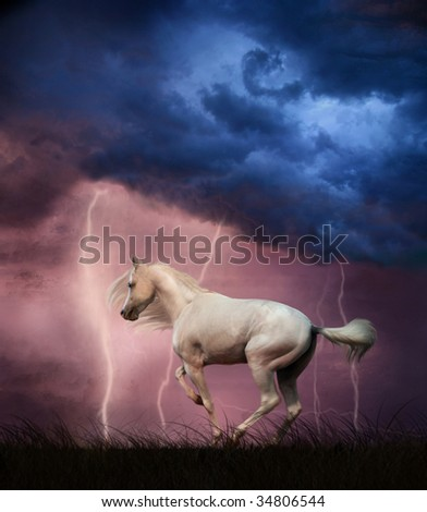 White horse under thunder sky with lightning