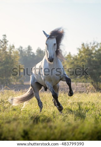 White horse with black mane and legs runs forward on the green grass on the trees background
