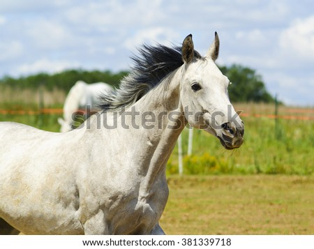 white horse with black mane running on the green field