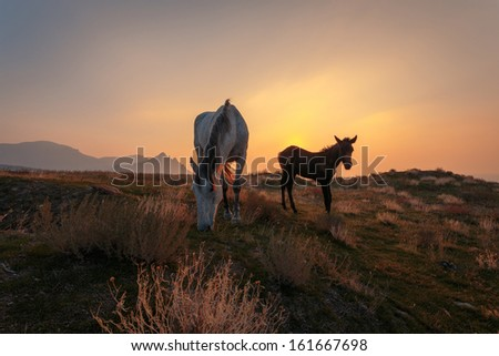 White horse with brown foal on pasture at the seaside