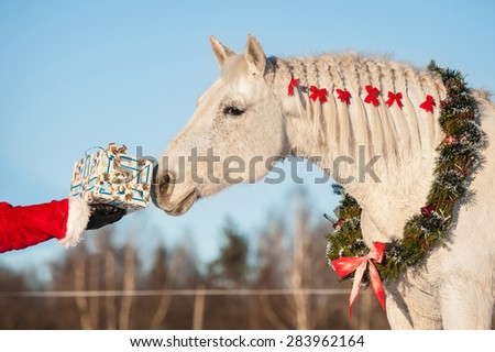 Gift horse stock images royalty free images vectors shutterstock white horse with christmas wreath taking a gift from santas hand negle Image collections