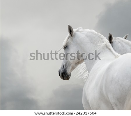 white horses in storm - stock photo