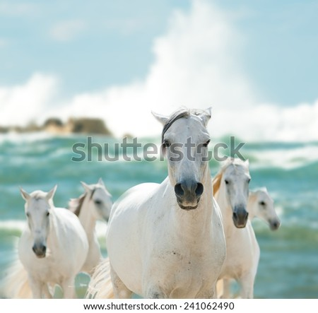 white horses on the sea - stock photo