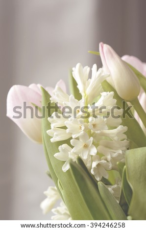 White hyacinth and pink tulips in soft light - stock photo