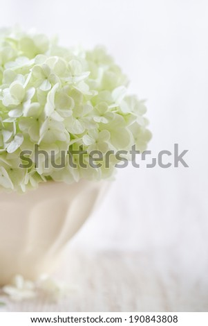 white hydrangea flowers in a ceramic bowl, detail