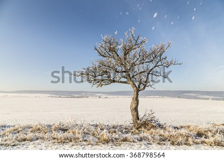 white icy trees in harmonic snow covered landscape - stock photo