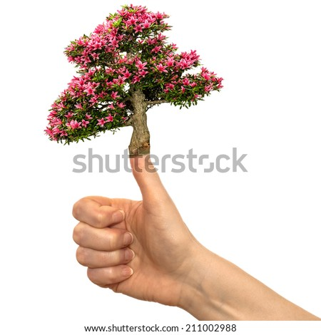 White isolated hand with azalea flower on the thumb of a hand - stock photo
