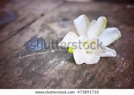 White Jasmine flower on wood