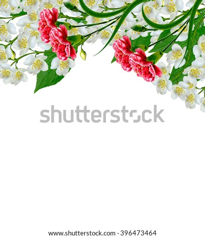 White jasmine flower. The branch delicate spring flowers. branch of jasmine flowers isolated on white background. spring flowers. red carnation - stock photo