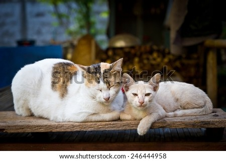 White kitten and his mother. - stock photo