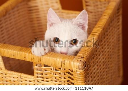White kitten in a basket.Studio shot. - stock photo