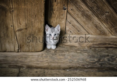 white kitten in doorway - stock photo
