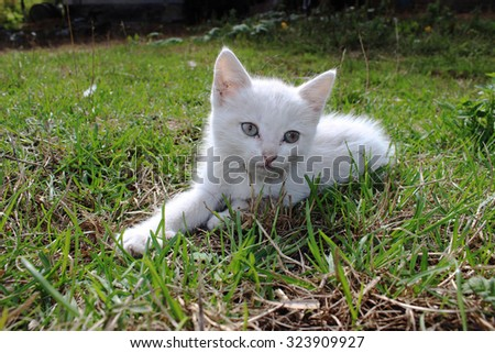 White kitten lying on green grass