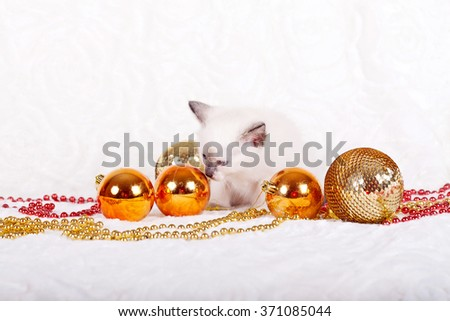 White kitten on a white background - stock photo