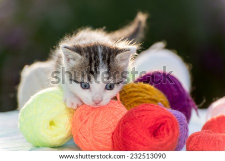 White kitten plays with balls of yarn - stock photo