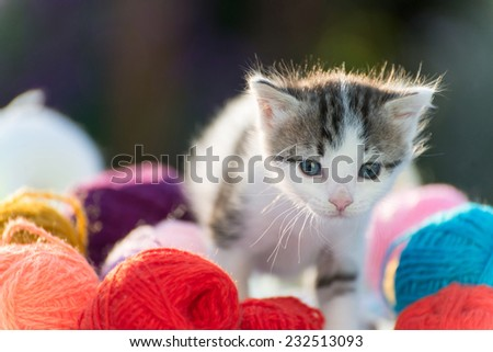 White kitten plays with balls of yarn