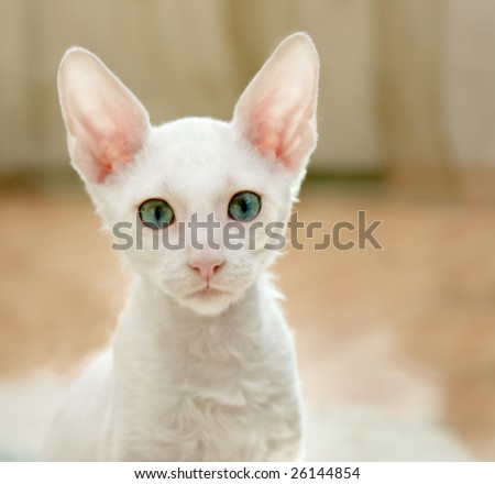 White kitten's staring - stock photo