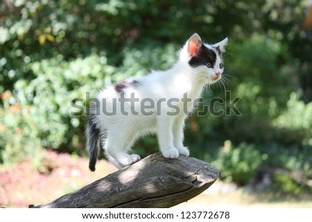 White kitten standing on the tree branch exploring - stock photo