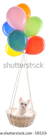 White kitten traveling with color balloons isolated on white. - stock photo
