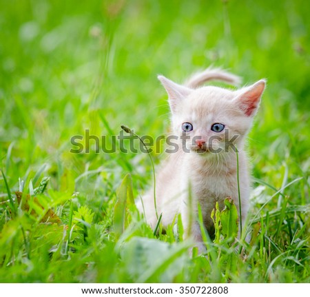 white kitten walking on the grass in park