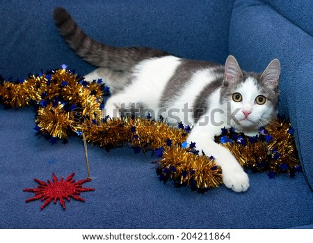 White kitten with gray spots playing with golden Christmas garland with stars - stock photo