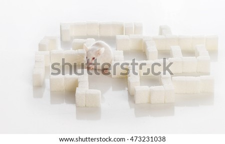 white laboratory mouse in a maze of sugar cubes, diabetes concept
