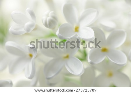 White lilac flowers background stock photo royalty free 273725789 white lilac flowers background mightylinksfo