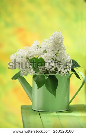 White lilacs twig in a vase/ watering pot - stock photo