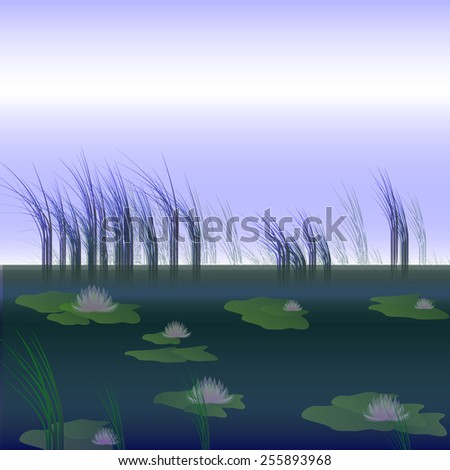 white lilies and reeds on the pond - stock photo