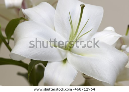 White lily bud on branch closeup
