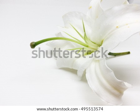 White lily flower isolated on white background.