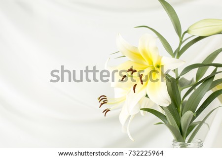 White lily in a glass vase on a white background