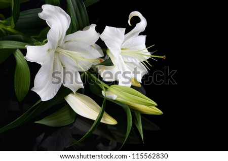 White lily on a black background - stock photo