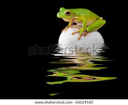 White-lipped tree frog reflected on a wet boulder - stock photo