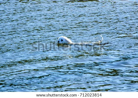 White little dog in the sea