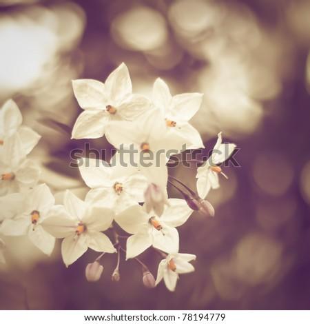 White little flowers - stock photo
