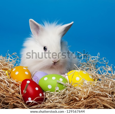 white little rabbit and easter eggs - stock photo