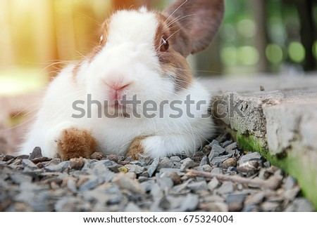 white little rabbit portrait in playground with sunrise. soft focus.