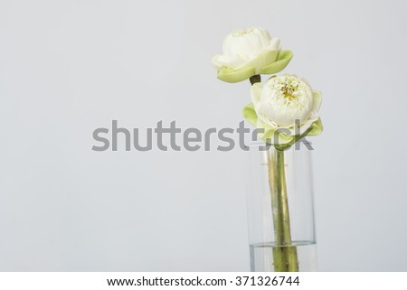 white lotus flower in vase