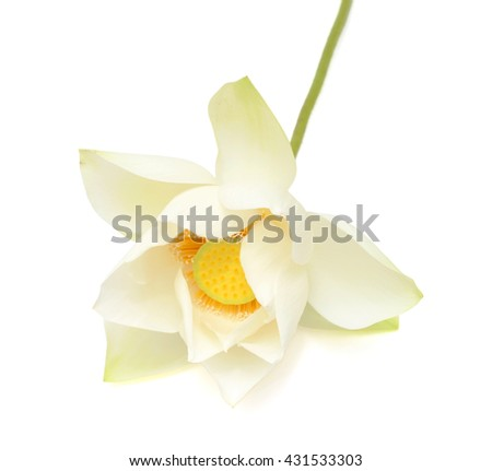 White Lotus flower isolated on white