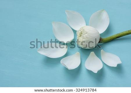 White lotus flower on blue background - stock photo