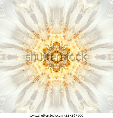 White Mandala of Cornflower Flower Center Close-up. Mirrored Concentric Kaleidoscopic Design of the Center of the Flower - stock photo