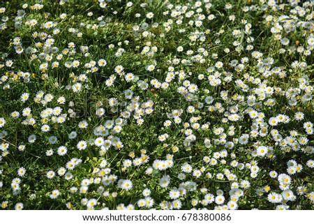 White meadow flowers background stock photo 678380086 shutterstock white meadow flowers background mightylinksfo