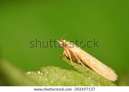 white moth insects on green leaf in the wild